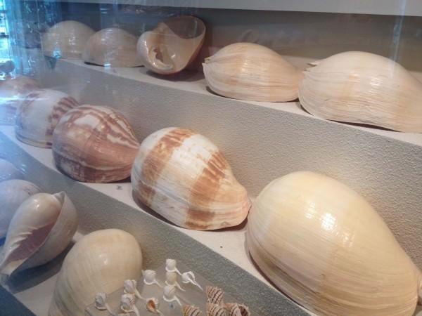 たくさんの貝殻