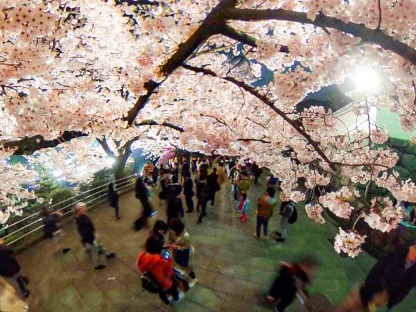 シータで撮影した桜