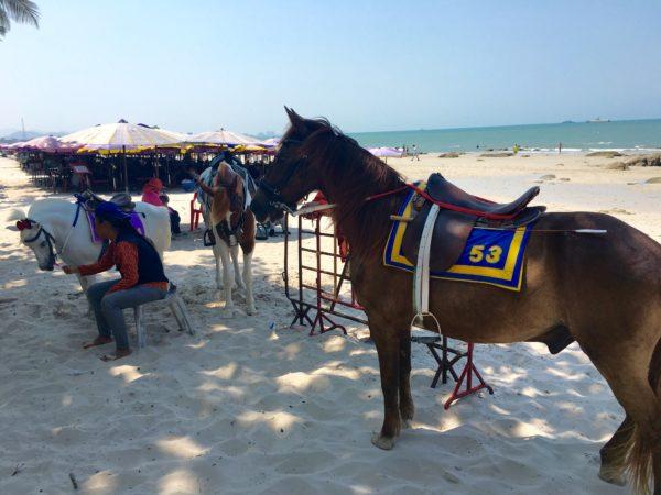 ホアヒンビーチの馬