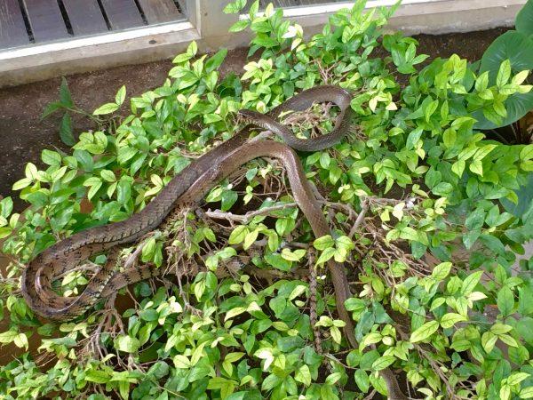 スネークファームの蛇2