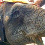 ポーズを決めているエレファントキャンプの象