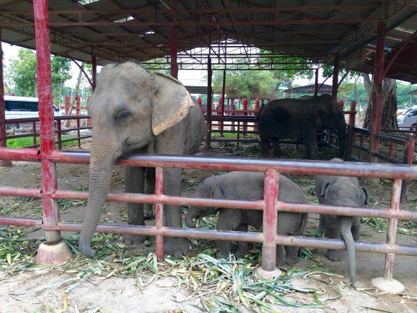 象の囲いにいた象