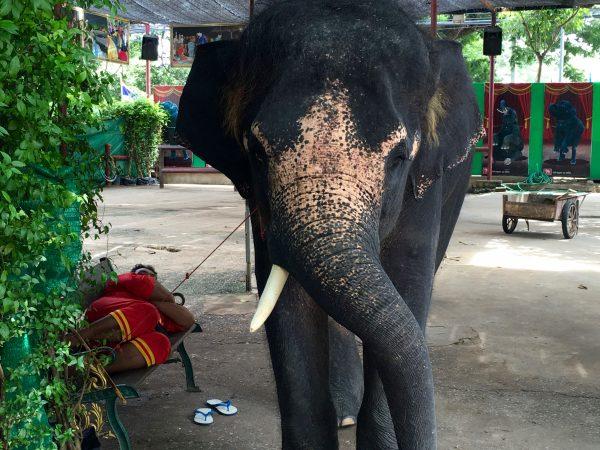 エレファントキャンプ 餌やりばの象