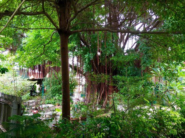 ゲストハウスの中庭