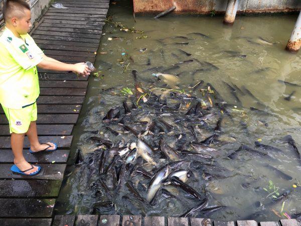 魚に餌をあげている少年