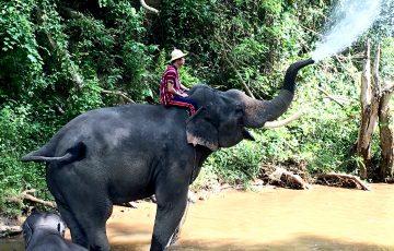 鼻から水を噴射している象