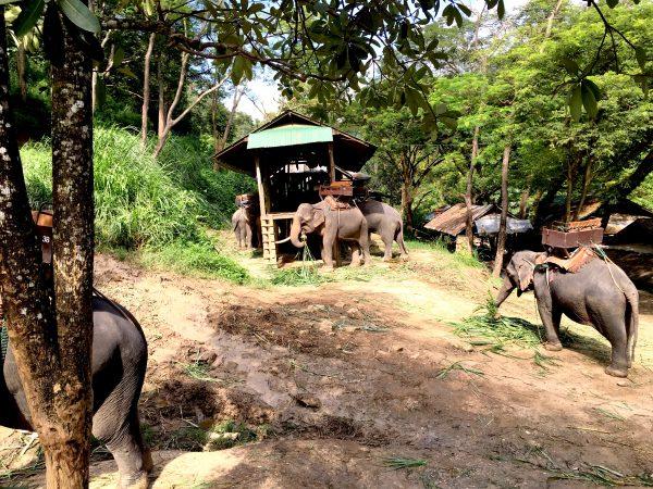 食事中の象達
