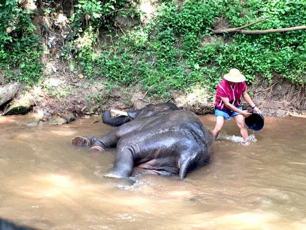 象の水浴び2