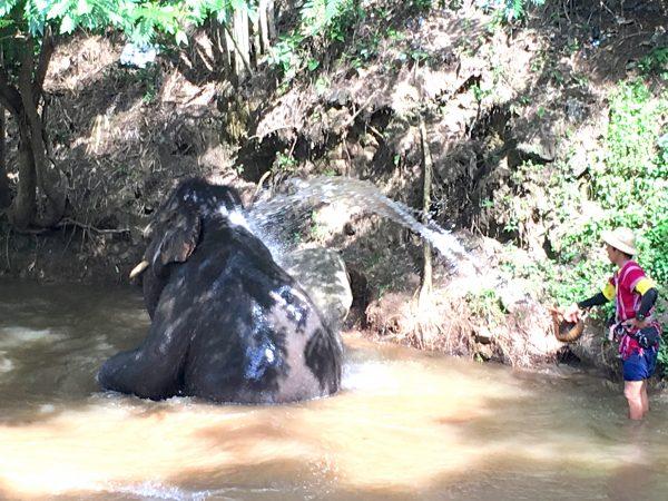 象の水浴び3