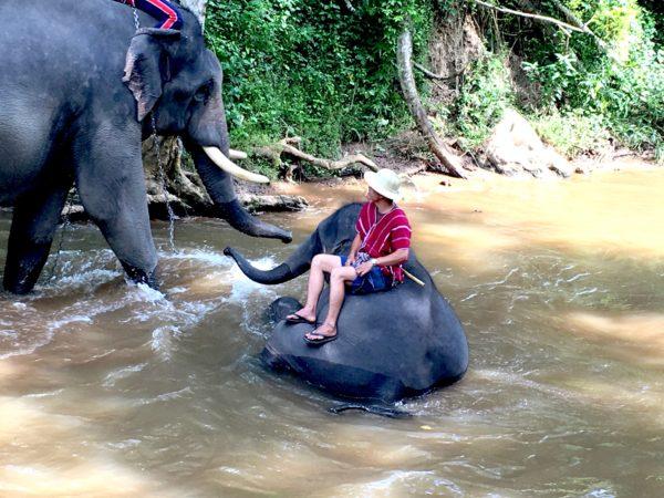 メーサーエレファントキャンプでの象の水浴びショー