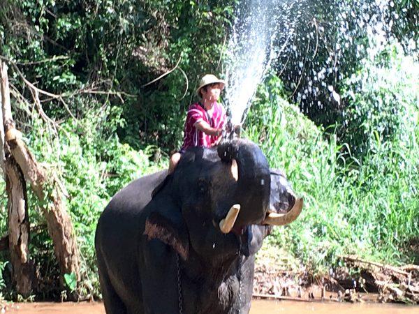 象の水浴び5