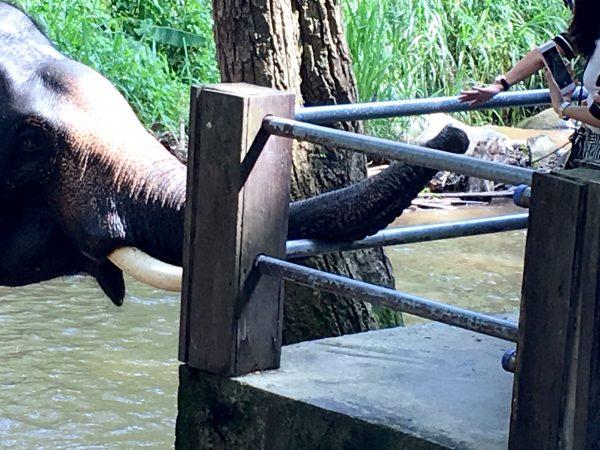 象の水浴び6