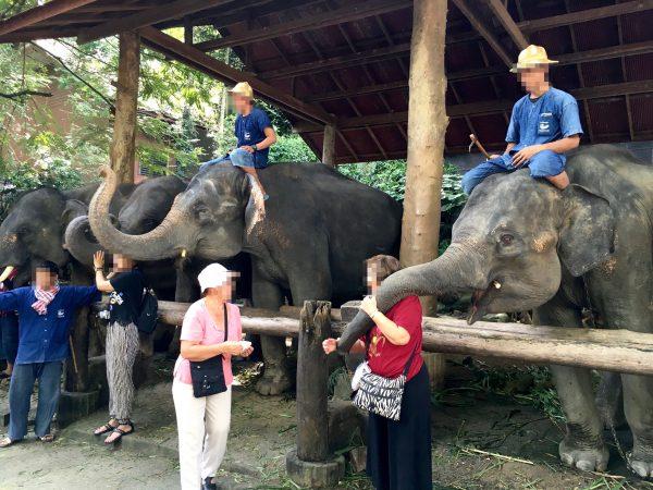 象との記念撮影1