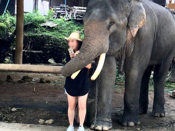 象との記念撮影2