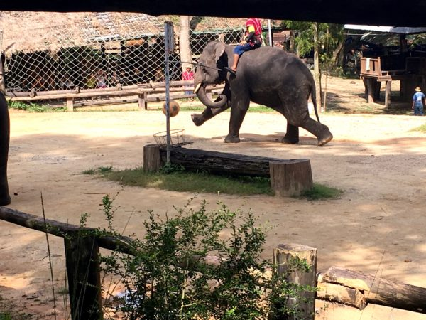 メーサーエレファントキャンプでの象のショー