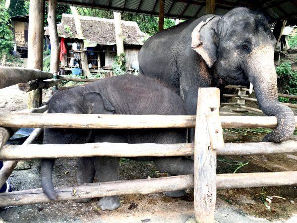 赤ちゃん象への餌やり