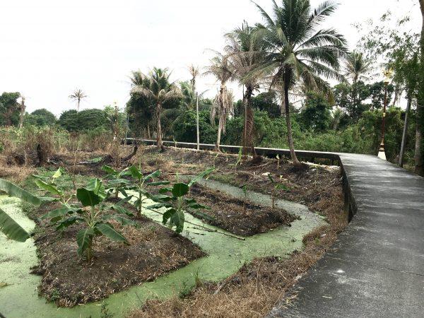 クレット島の田舎道20