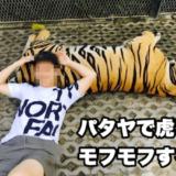 タイガーパークパタヤのアイキャッチ画像