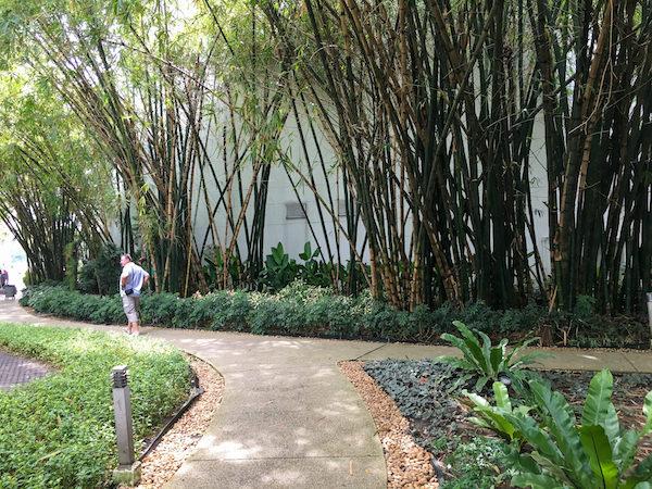 チャトリウム ホテル リバーサイド バンコク (Chatrium Hotel Riverside Bangkok)敷地内の手入れされた植物