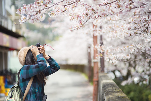 桜を撮影している旅行者