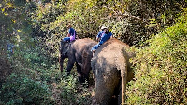 象とトレッキング中の外国人達