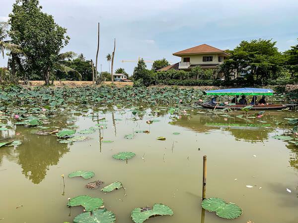 クローンラットマヨム水上マーケットに併設されている蓮池