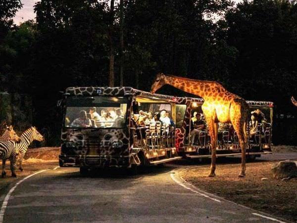 チェンマイナイトサファリ(ChiangMai Night Safari)のキリン
