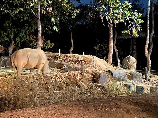 チェンマイナイトサファリ(ChiangMai Night Safari)のサイ