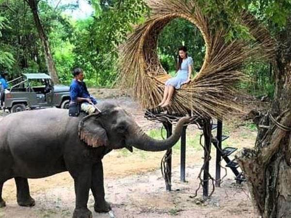 モンチャーンカフェ(Mongchang Cafe)に遊びに来る象