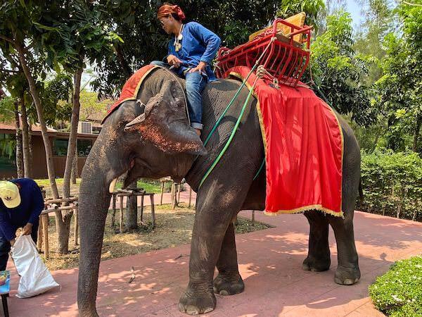 ムアンボーランでの象乗り体験