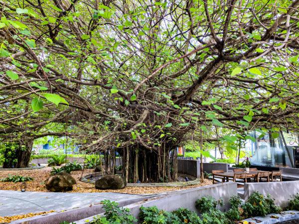 ナバーナネイチャーエスケープ(Navana Nature Escape)の敷地内に植えられている植物