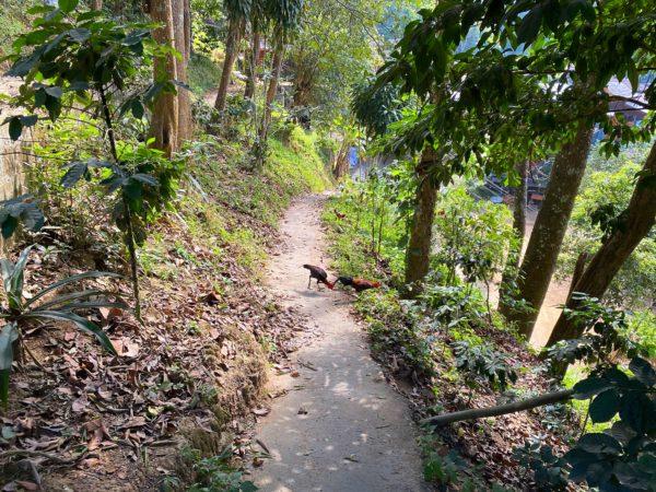 メーカンポン村の集落へ続く道