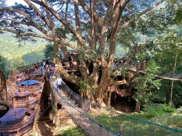 ザ・ジャイアント・チェンマイ(The Giant Chiangmai Thailand)の吊り橋