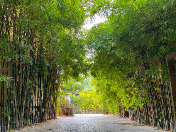 イサーン イサン ブティック リゾート バイ アンダキュラ(Isaan-Isan Boutique Resort by Andacura)の敷地内にある竹林