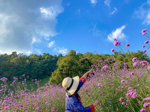 モンチェムの花畑2