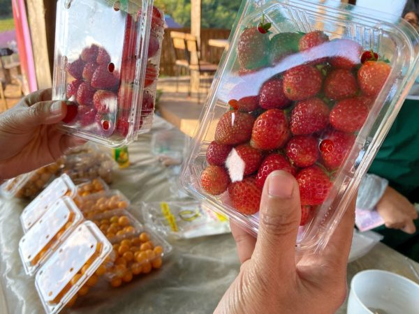 モンチェムで採れたイチゴ