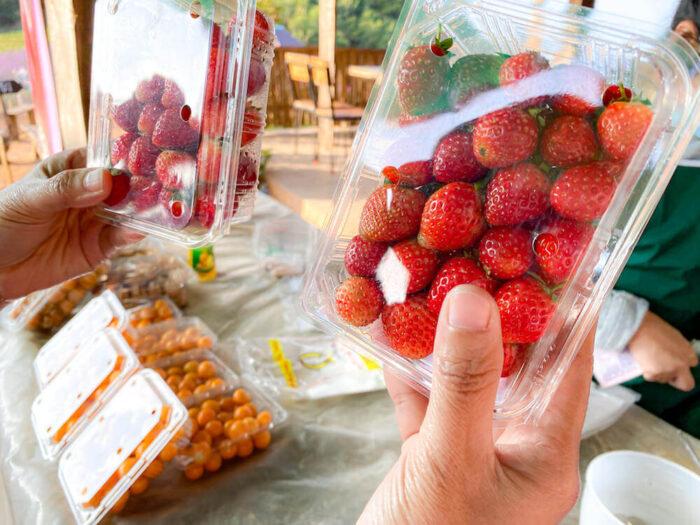 モンチェムで売られているイチゴ