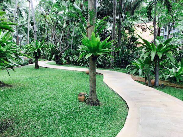 朝の中庭1