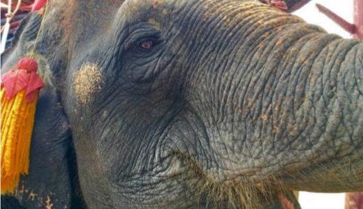アユタヤに来たらエレファントキャンプで象乗り体験を楽しもう。