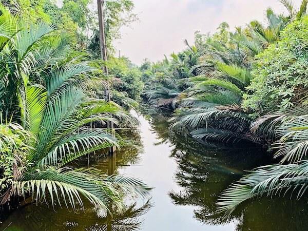 バーンガジャオに生息するマングローブ植物