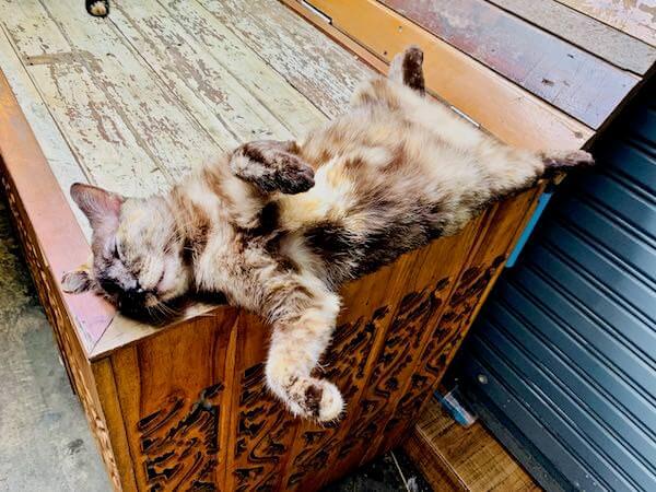 バンプリー百年市場で昼寝していた猫
