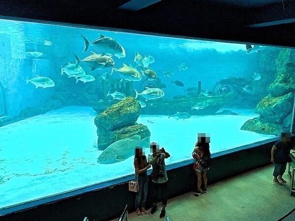 バンセン海洋科学研究所の巨大魚展示エリア
