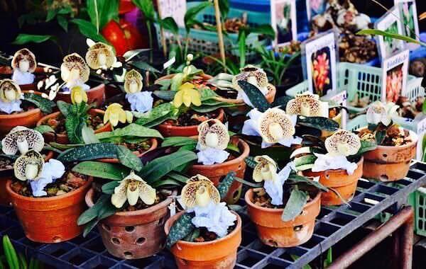 チャトゥチャックで売られている植物