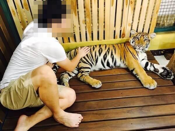赤ちゃん虎との写真撮影