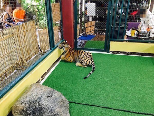 囲いの外に興味を示す赤ちゃん虎