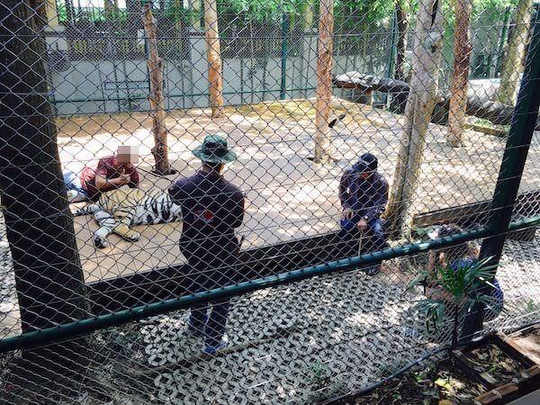 大型虎と写真撮影している観光客