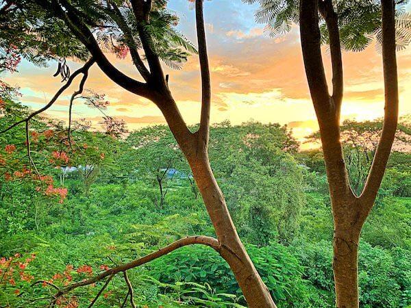 インチャントリードゥープール(inchantreedoopool)のバルコニーから見える景色2