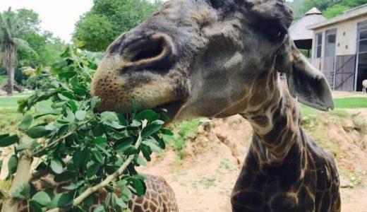 カオキアオ動物園の楽しみ方と回り方。マストな見所と可愛い動物ショー。