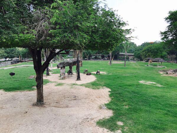 カオキアオ動物園のキリンやダチョウが飼育されているエリア