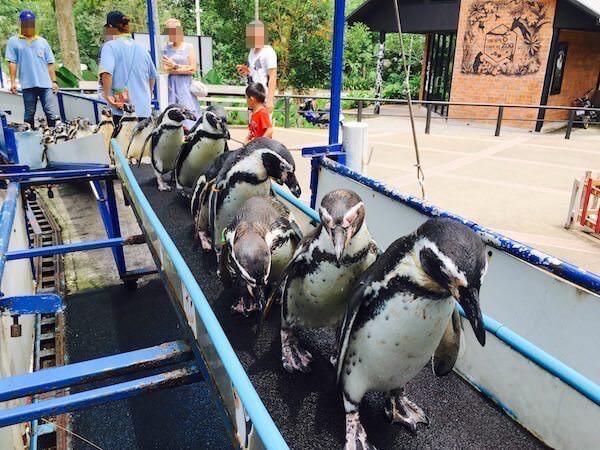 ペンギンの大行進